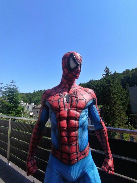 spider 22.jpg