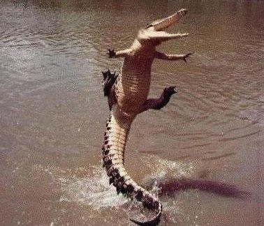 crocs.jpg.92bd4d07c763524d3b37e420b59dbdd8.jpg